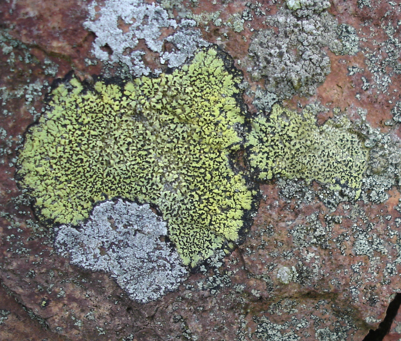 lichens on rocks
