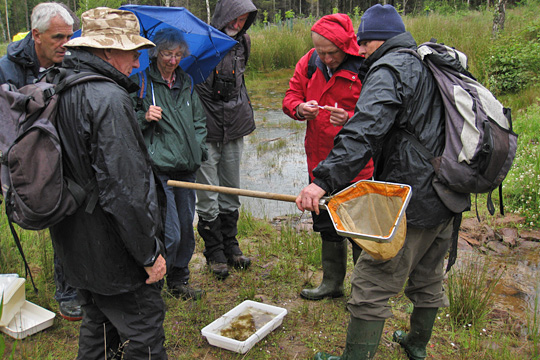 Group of people pond dipping in the rain